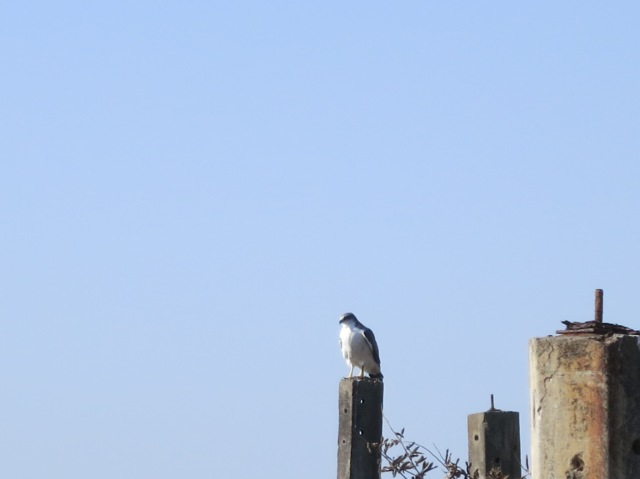 A bird waits for liftoff atop the remains of the House of Names.