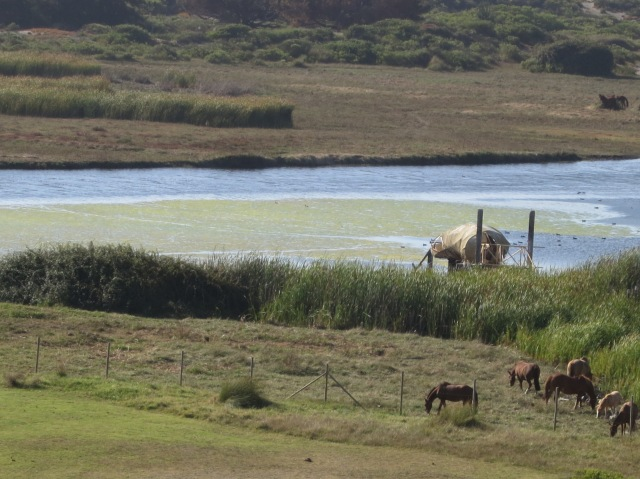 Marshes, horses, and a vessel at the north end of the Open City.